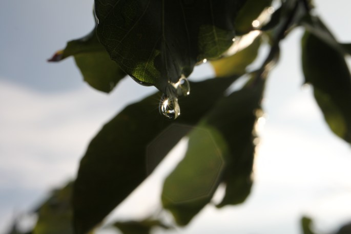 Sunlight sparkling off a raindrop