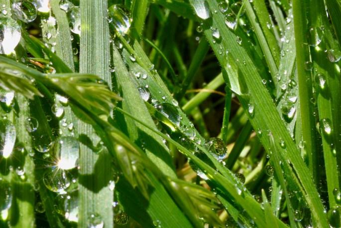 Sparkling raindrops