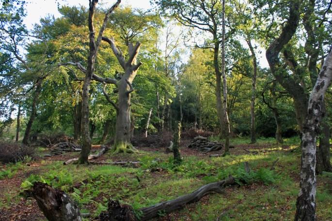 Palacerigg Country Park