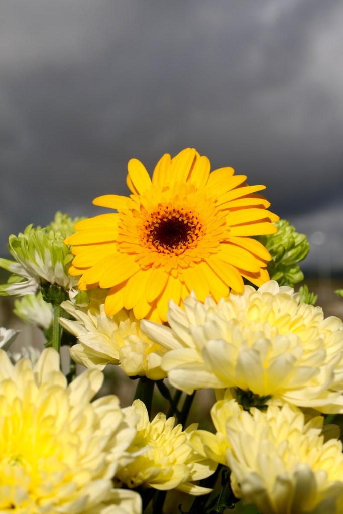 Gerbera daisy & chrysanthemums