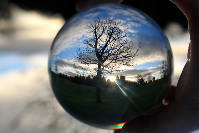 Tree in a lensball