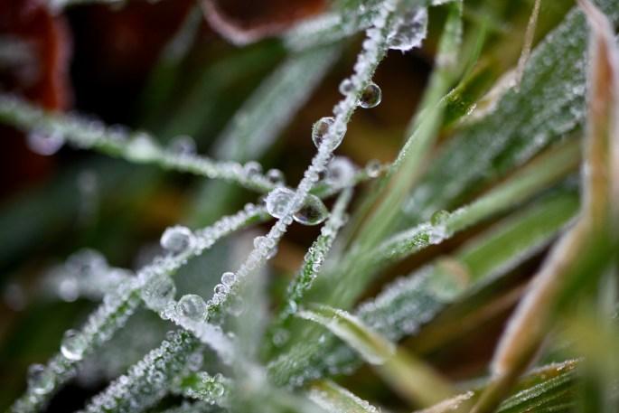 Icy dew