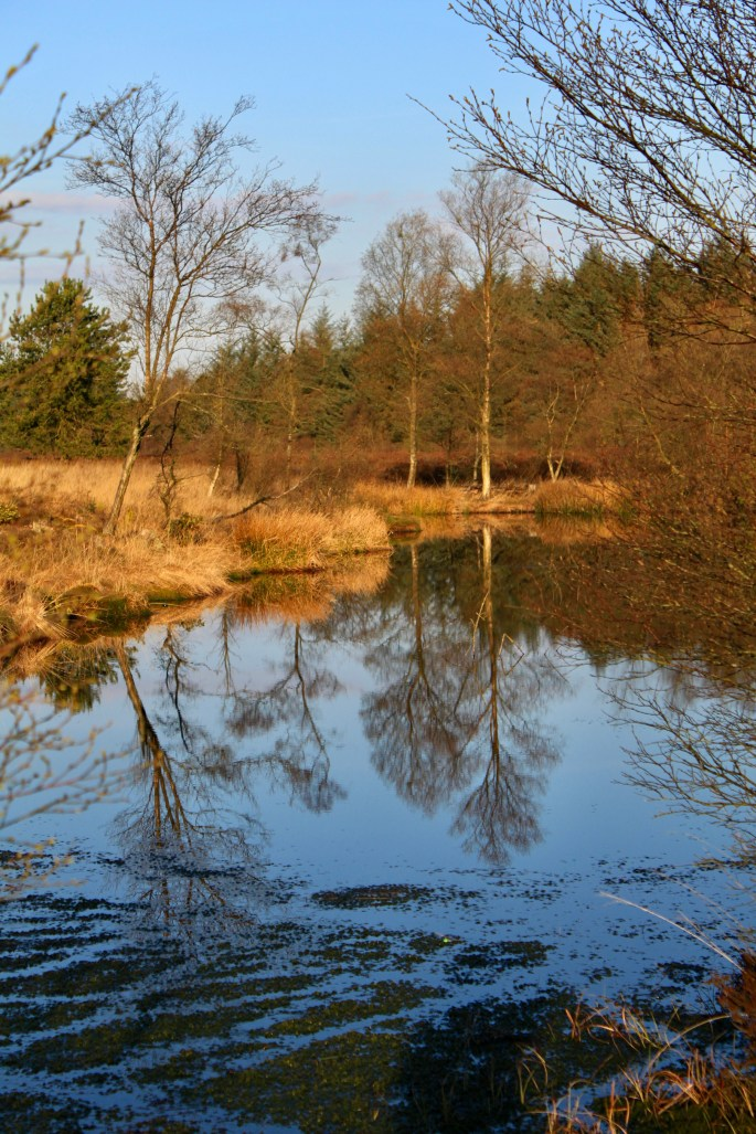 Trees reflected in a lochan