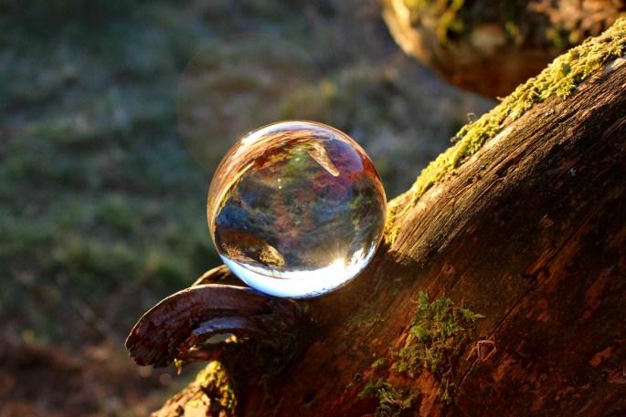 Lensball on fallen branch