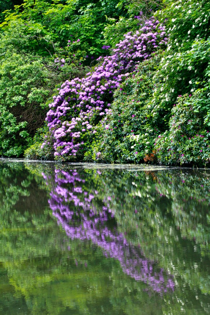 Rhodie's by the Canal