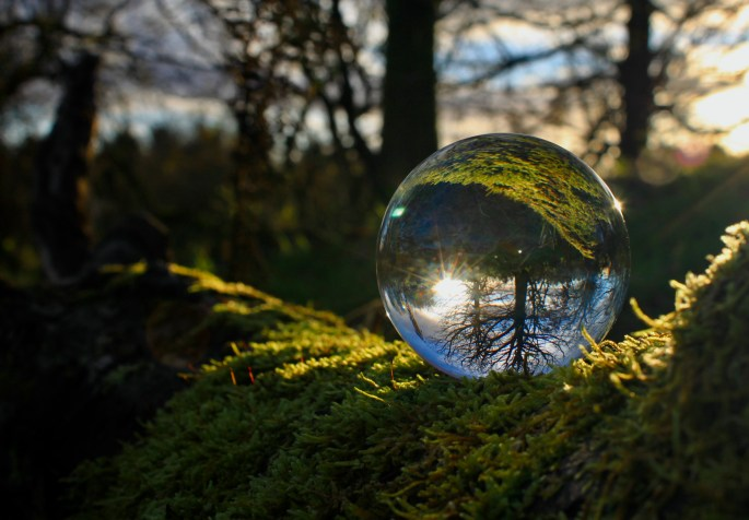 Lensball on a mossy branch