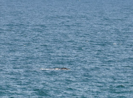 This whale was a little closer