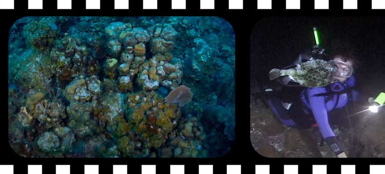 Documentaire Netflix : Mission Blue