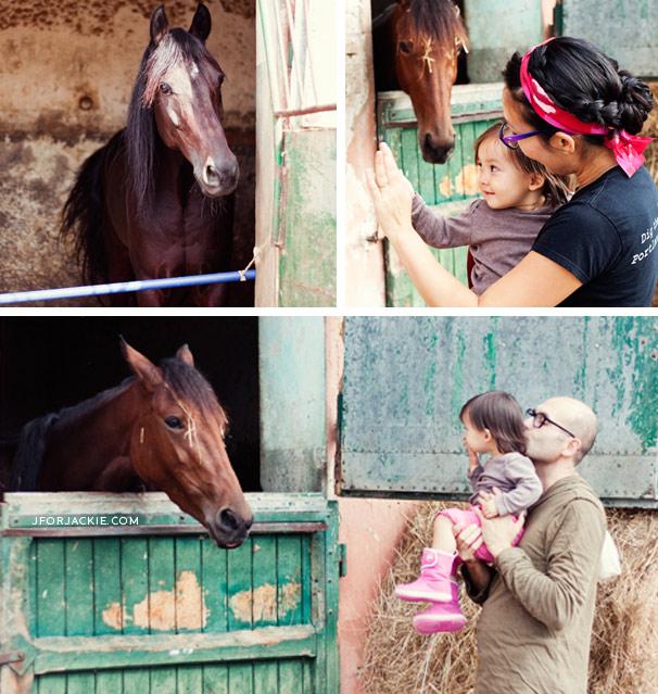 Stables & Horses in Florence - Ippodromo Cascine