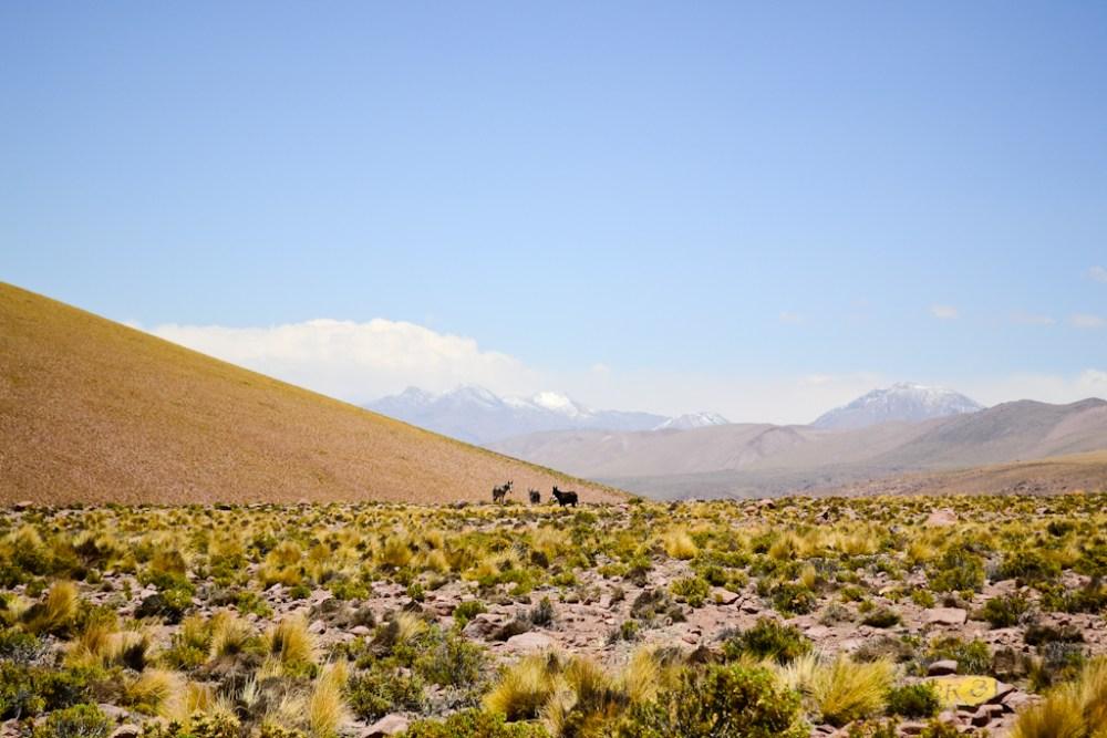 [Fotografía] - Altiplano Norte de Chile (5/6)