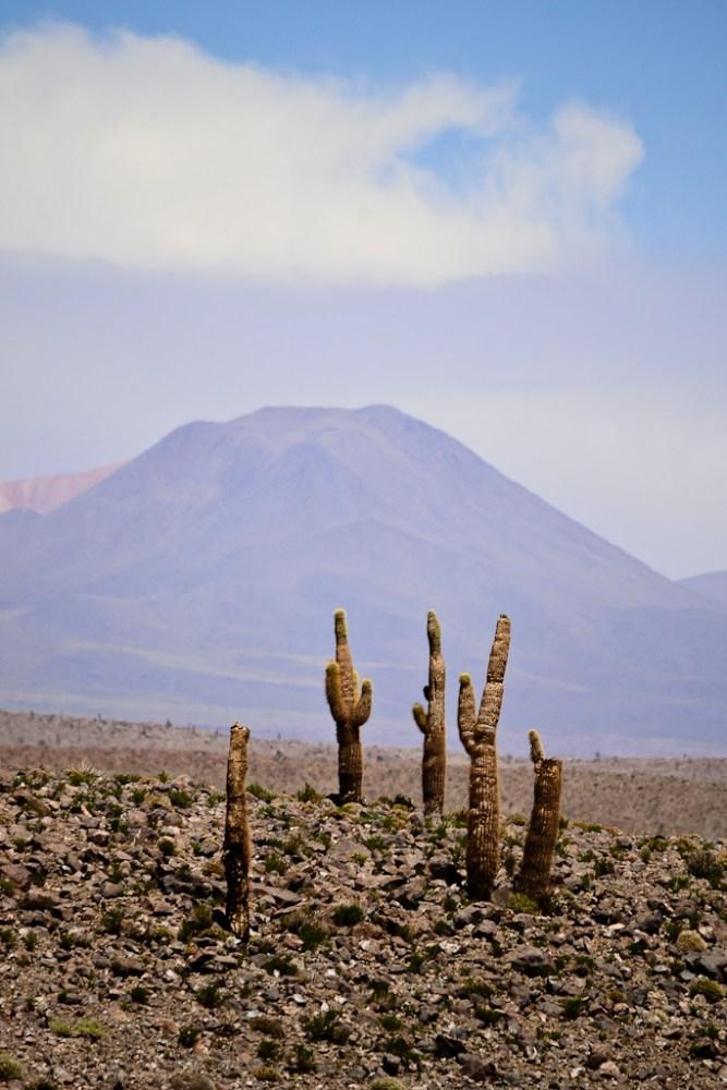 [Fotografía] - Machuca y alrededores, norte de Chile (1/6)