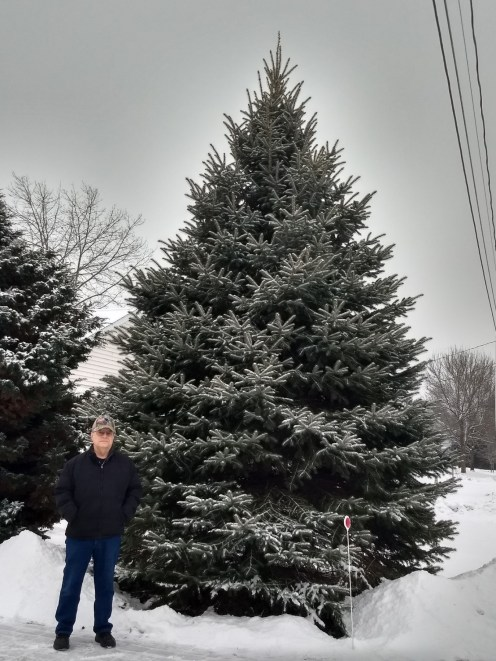 Ray Gagne with his blue spruce tree. (Photo Courtesy Ray Gagne)