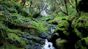 Cataract Falls - Mt Tamalpais - Marin County California