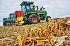 Fall Silage Harvest