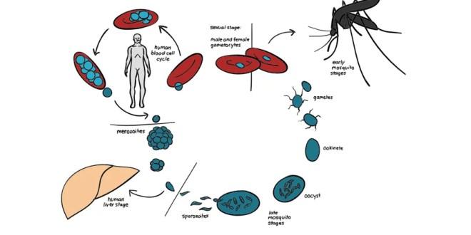 मच्छर जनित बीमारियों