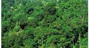 वन अधिकार कानून के खिलाफ है ' लैंड-बैंक '