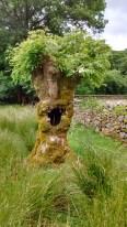 14.5 Human tree