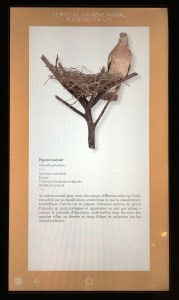 A digital label, complete with a fantastic photo and a full description of the featured object (author photo)