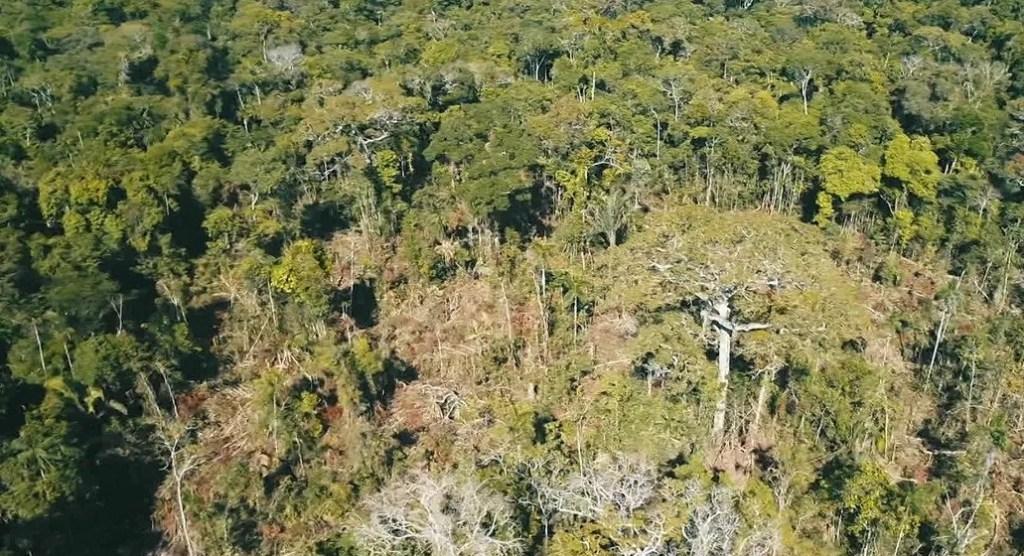CONFLITO – PM e ICMBIO destrói acampamento de grileiros no Parque dos Pacaás Novos