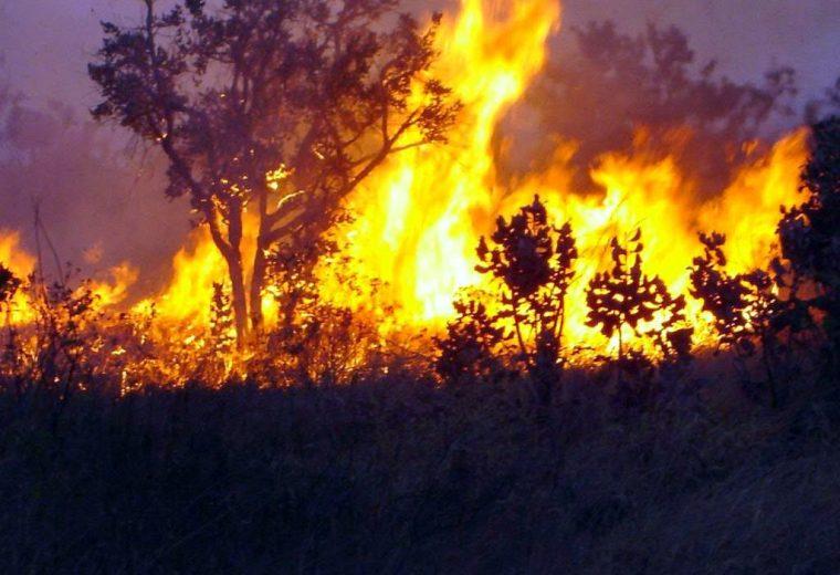 Rondônia lidera queimadas no país com 1609 focos em 48 horas