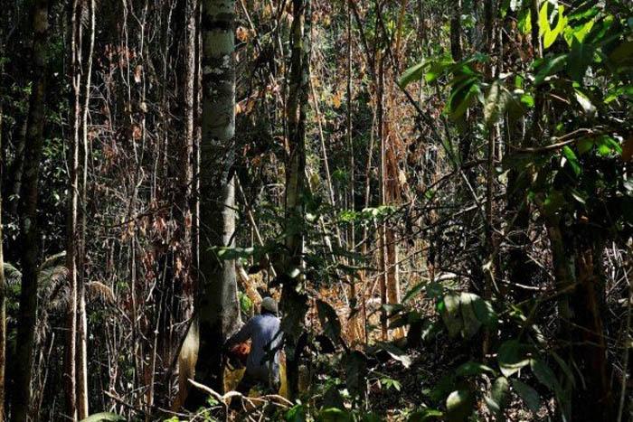 Rondônia e Pará desmataram mais do que a soma de todos os outros da Amazônia