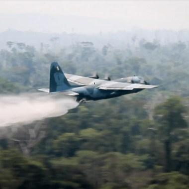Em um mês de atuação, Operação Verde Brasil prende 53 pessoas