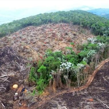 Crime organizado e milícias estão ligados a desmatamentos na Amazônia