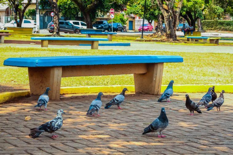 Agevisa orienta sobre riscos da Doença do Pombo