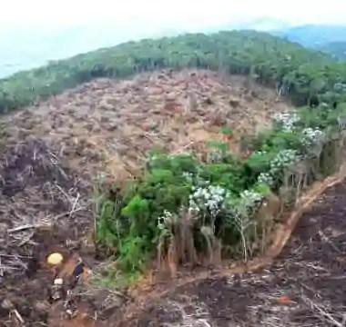 Desmate na Amazônia voltou a subir, apontam dados do Inpe