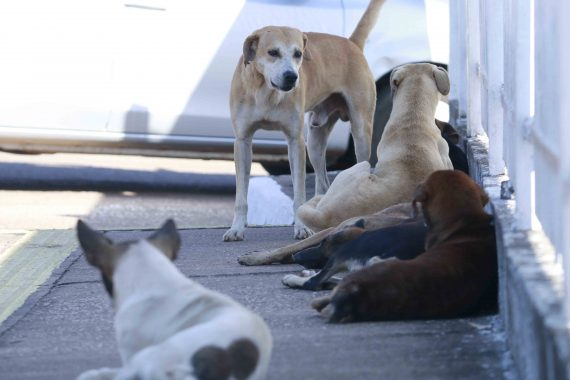 Governo do Estado sanciona Lei que obriga estabelecimentos a comunicar maus tratos aos animais