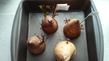 Potato quality cell phone pic.