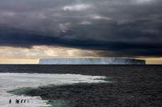 You Go First, Adelie Penguins,The Ross Sea, Antarctica, December 2006