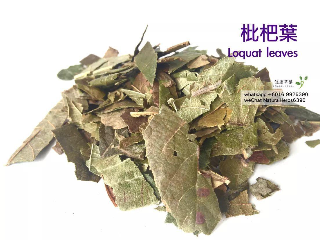 【止咳化痰】枇杷葉 Loquat leaves