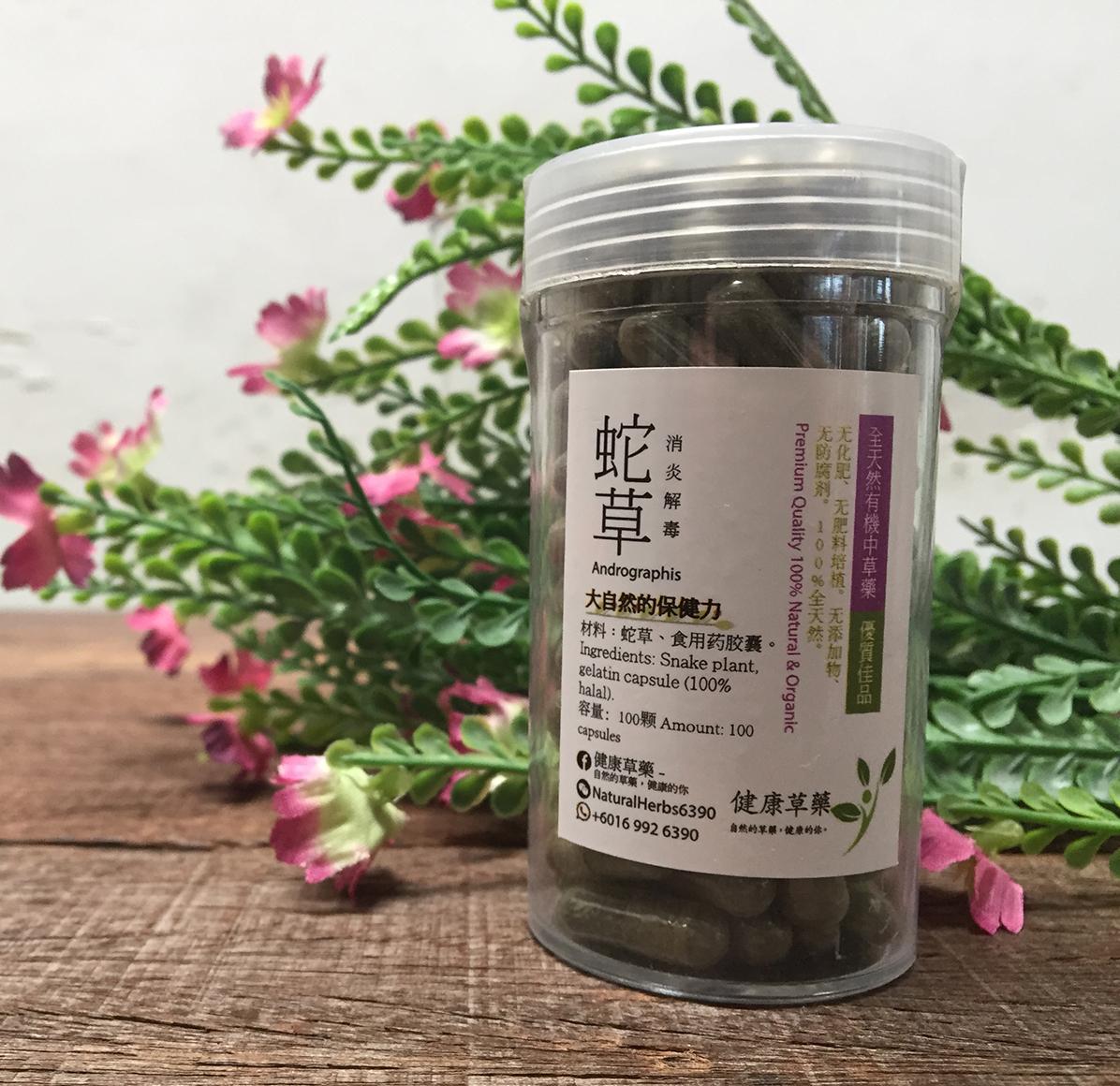 穿心蓮 蛇草 Andrographis Paniculata – Hempedu Bumi
