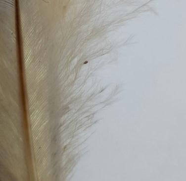 clos-up-feathe