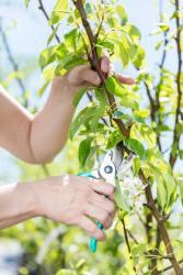 women-gardener-cutting-tree-branch-.jpg