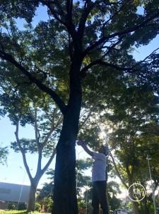 Don Alfredo, presidente de la junta vecinal aprende a estimar la altura de un hermoso tajibo.