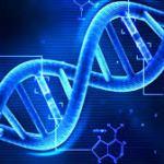 【吉報】AGA遺伝子の働きは自分の努力で変えられる!