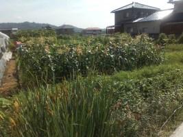 遠方で辺鄙な場所にある土地を、東京にいながらにして売却できるのかどうか悩んでいました。