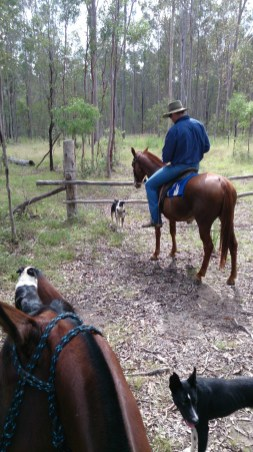 Jackaroo and his dogs.