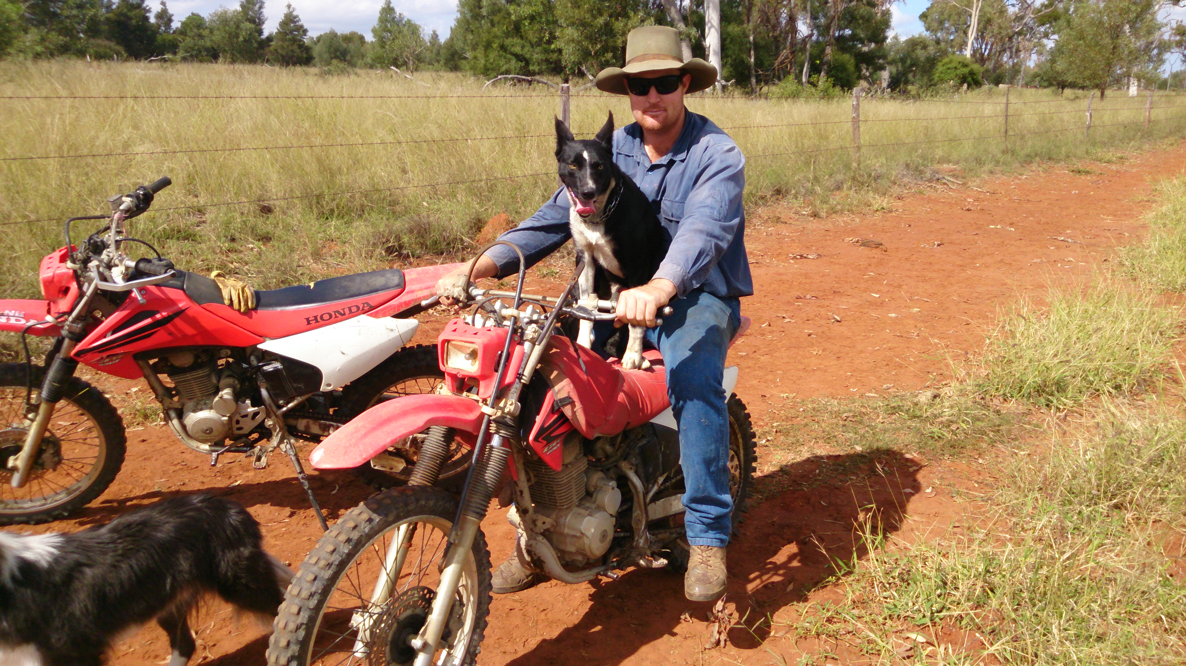 Jackaroo and 'Dodge' travelling in style.