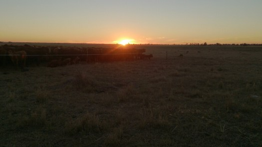Sunset on the stock route.