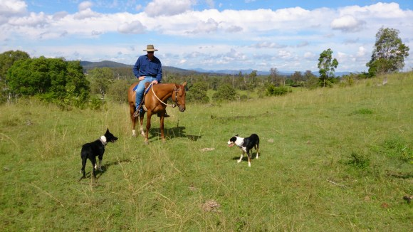 Jackaroo on Confidence with Dodge and Gemma.