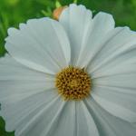 White Flower, Wisconsin
