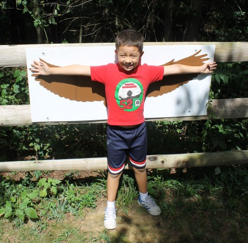 obs wingspan