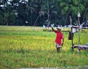 Part of my town's agricultural industry is the rice plantation. This old man is doing his old school stuff of farming.