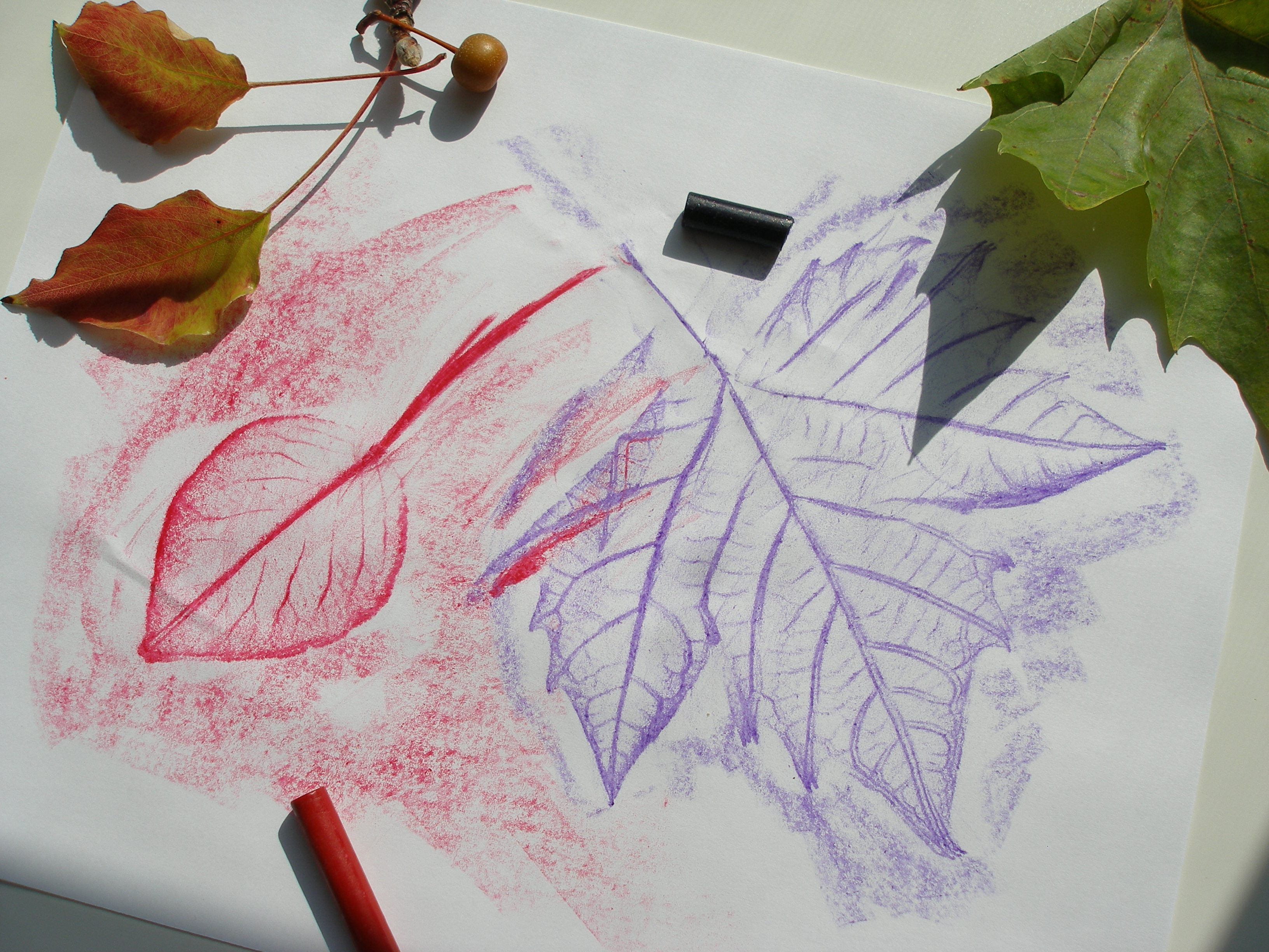 Leaf Rubbing Art Lesson Plan