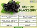 Blackberry Health Benefits