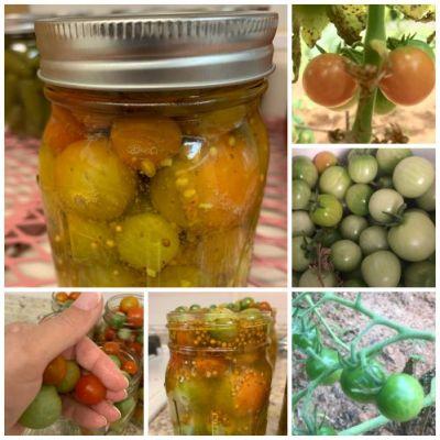 Garlic Bread and Butter Cherry Tomato Pickles