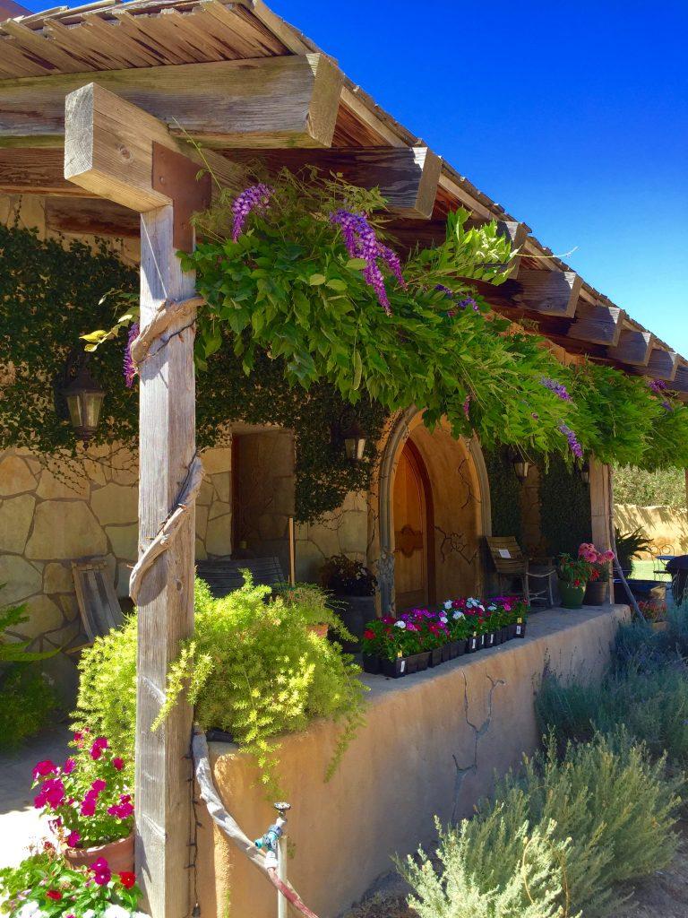 Abundance Winery Flowers